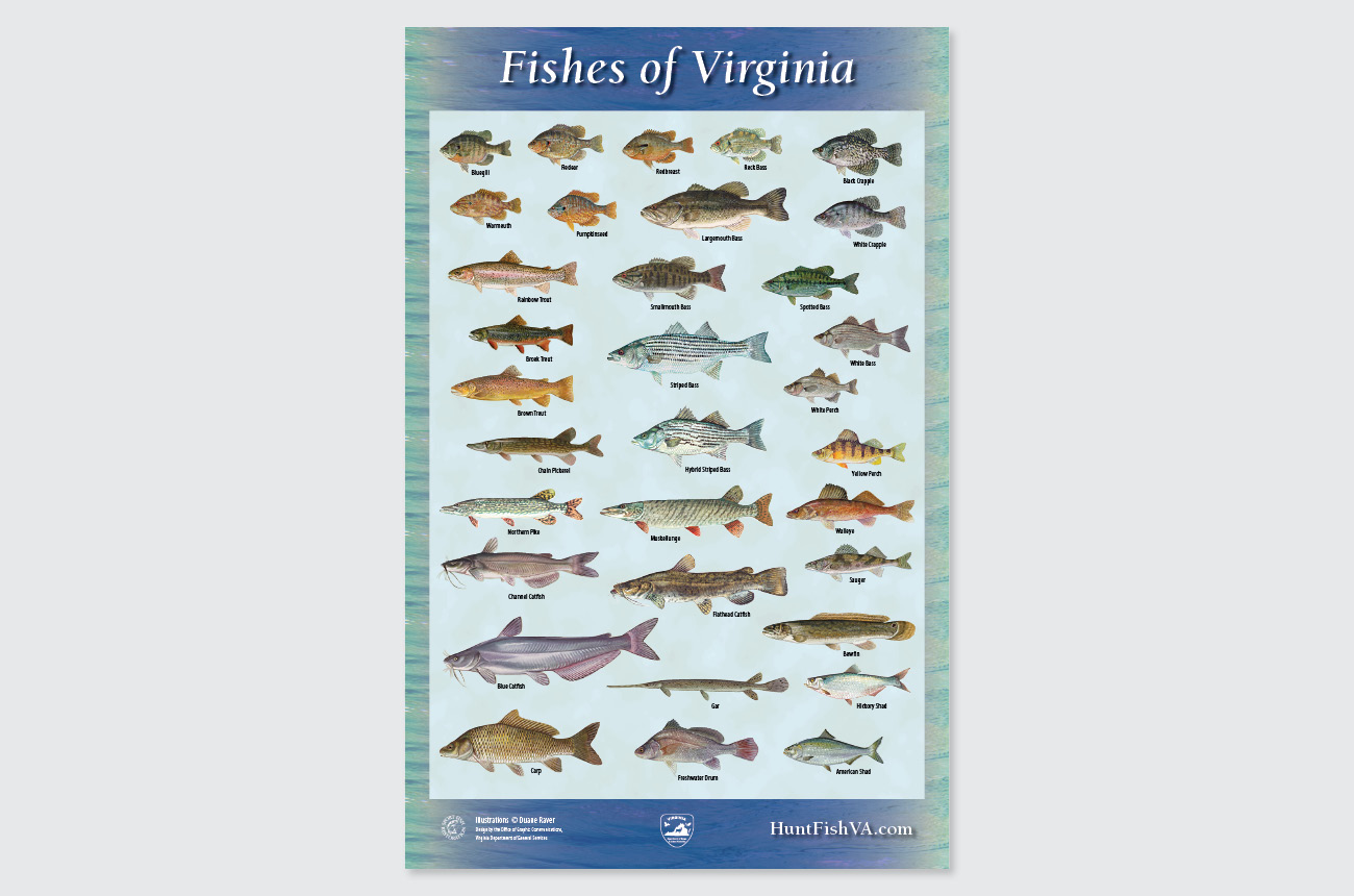 DGIF: Fishes of Virginia poster